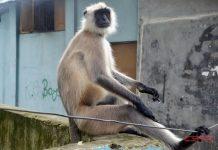 animale-dro-6-p-6